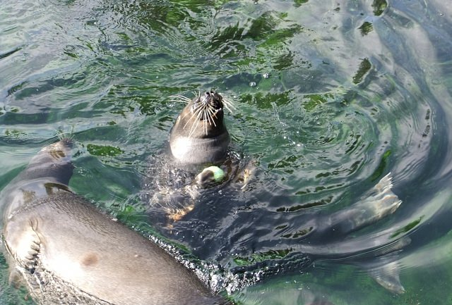 10. You can come into contact with animals in the Hakone-en Park