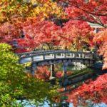 Autumn Leaves at Eikando-Zenrinji Temple, Kyoto
