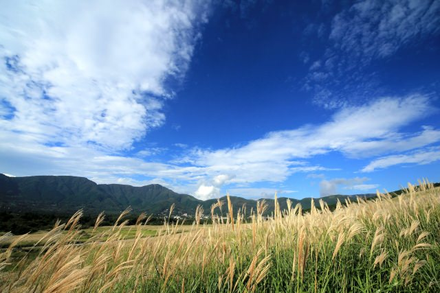 9. You can test your photography skill in the Sengokubara Japanese Pampas Grass Field
