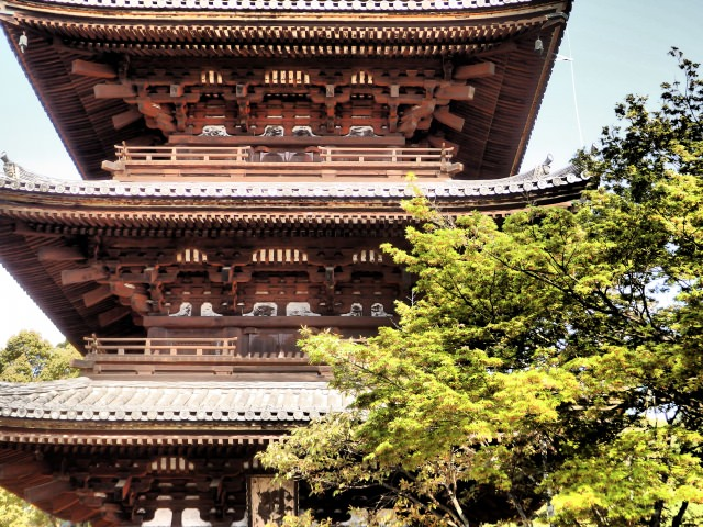 6. Ninna-Ji Temple – Cherry blossom loved by the Imperial family