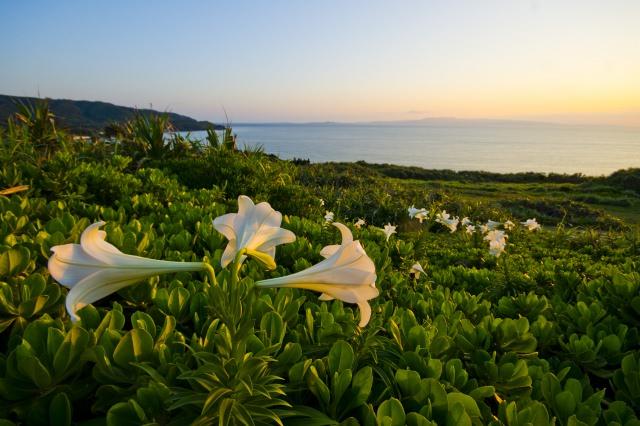 8. Cape Ongazaki