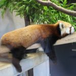 The 5 Best Zoos You Must Visit in Okinawa, Japan
