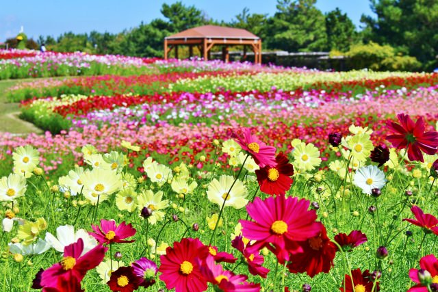 7. Akashi Kaikyo National Government Park