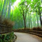 Top 10 Tourist Attractions & Best Things to Do in Arashiyama, Kyoto