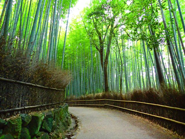 1. Bamboo forest