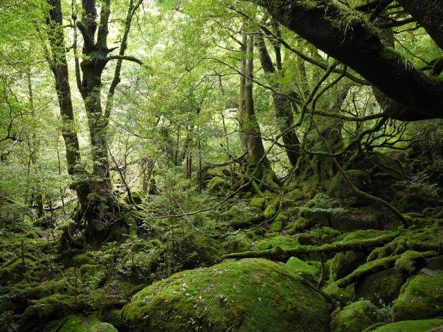 1. Yakushima