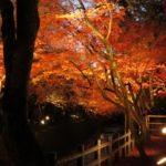 The 10 Best Spots to See Autumn Leaves in Kyoto, Japan