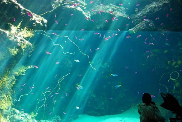2. Aqua marine Fukushima