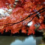 The 10 Best Places to See Autumn leaves in Tokyo, Japan!