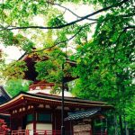 Top 10 Tourist Attractions & Best Things to Do in Wakayama, Japan