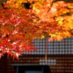 The 10 Best Places to see Autumn Leaves in Osaka!