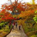 The 10 Best Places to See Autumn leaves in Kyushu, Japan!