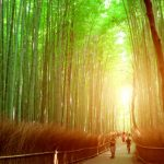 The 10 Best Tourist Attractions in Kyoto for Young Students!