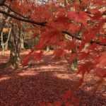 The 10 Best Places to see Autumn Leaves in the Kansai Region!