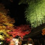 10 Best Places for Autumn Leaves in Sendai