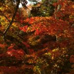 Go see the Outstanding Scenery of Autumn! The 10 Best spots to Enjoy Autumn Foliage in Hiroshima!