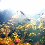 Summary of recommended aquarium of all over Japan! The hot and popular facility is Here!