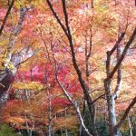 Top 10 Autumn Leaves Viewing Spots in Kobe!