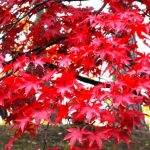 From the Regular to the Hidden Gems! The 10 Must-go Autumn Foliage posts in Aomori!