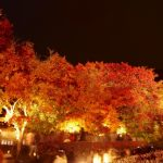Popular Spots To Hidden Gems! The Best 10 Spots For Viewing Autumn Leaves In Japan!